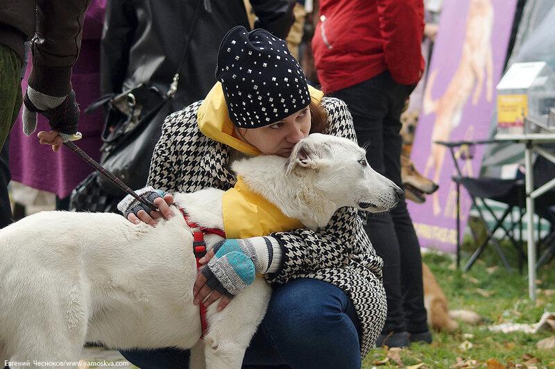 Осень. Фестивальный парк. Собаки. 04.10.14.13..jpg