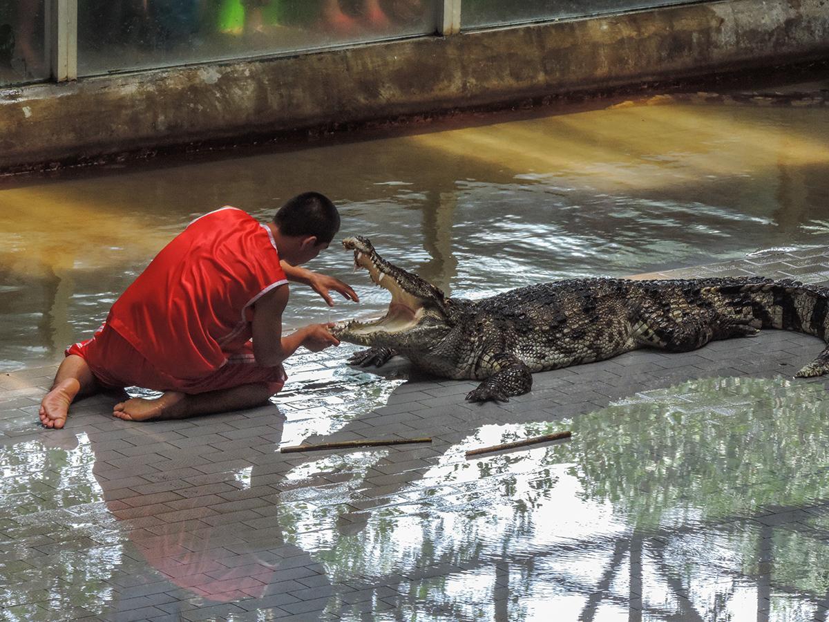На шоу крокодилов