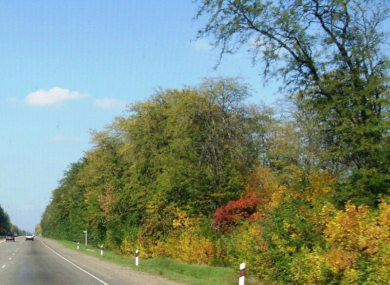Краски осенние, у дороги...  12 октября 2008, под Горячим Ключом, на слёте (219).JPG