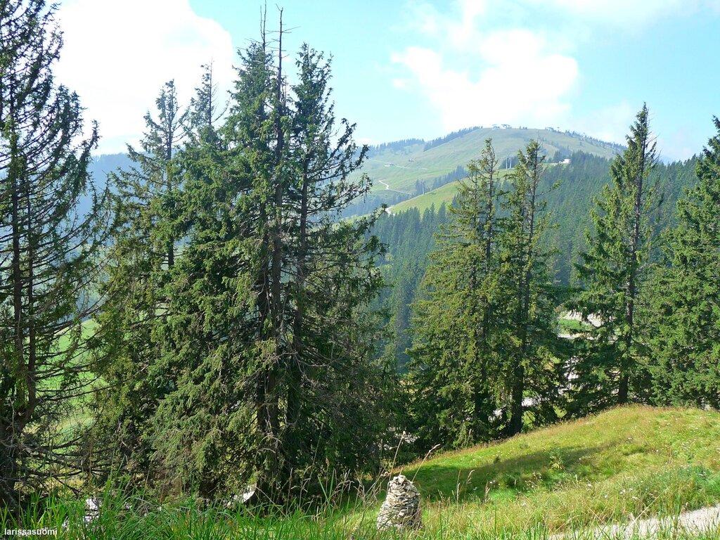 Ellmau. Австрийские Альпы.