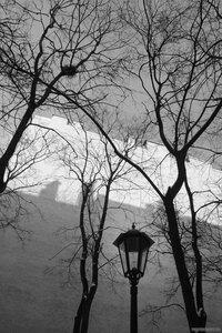 Линии петербургской весны (гнездо, монохром, стена, фонарь)