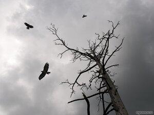 Троица  (дерево, канюк, птица, туча)