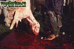 Убийство баранов