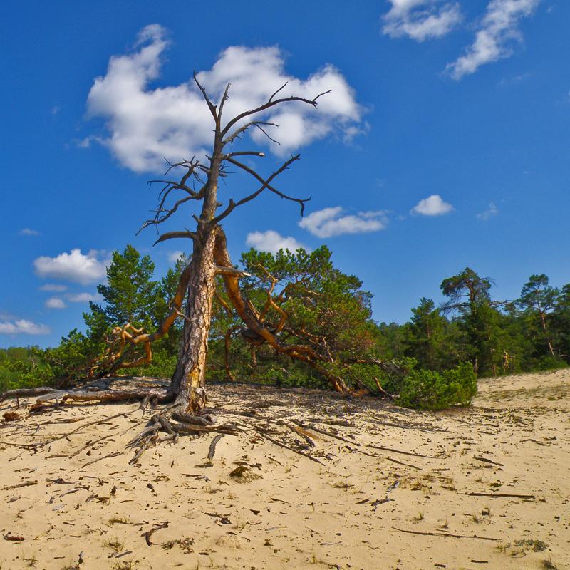 Смерть прижимает к песку