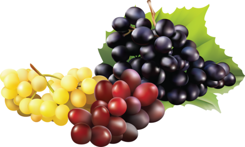 виноград (7).png