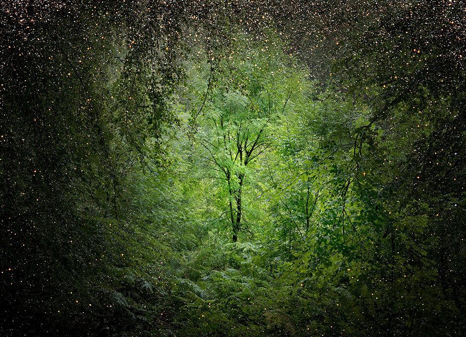 Into the woods, Ellie Davies_1280.jpg