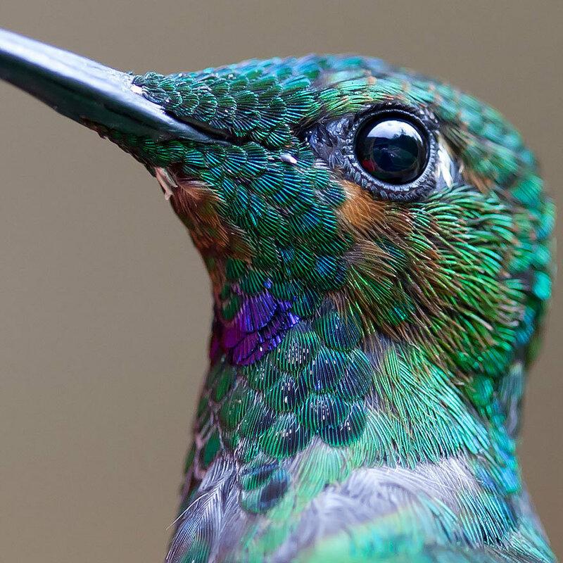 colibri-01.jpg