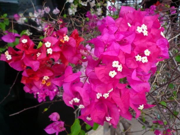 Цветы Таиланда 0 141ae2 11a0d3fa orig