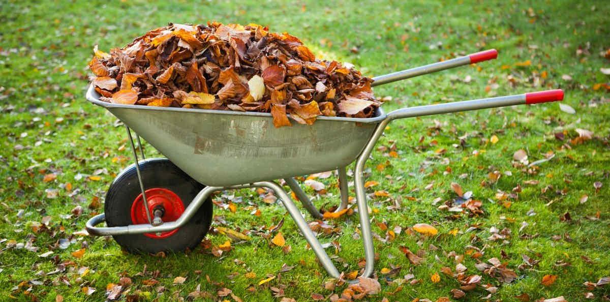 использование сухих листьев