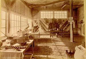Вид части одного из залов с экспонатами в сельскохозяйственном отделе выставки.
