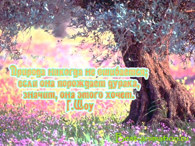 Цитаты великих людей - Сила природы, Красота природы – Природа никогда не ошибается...