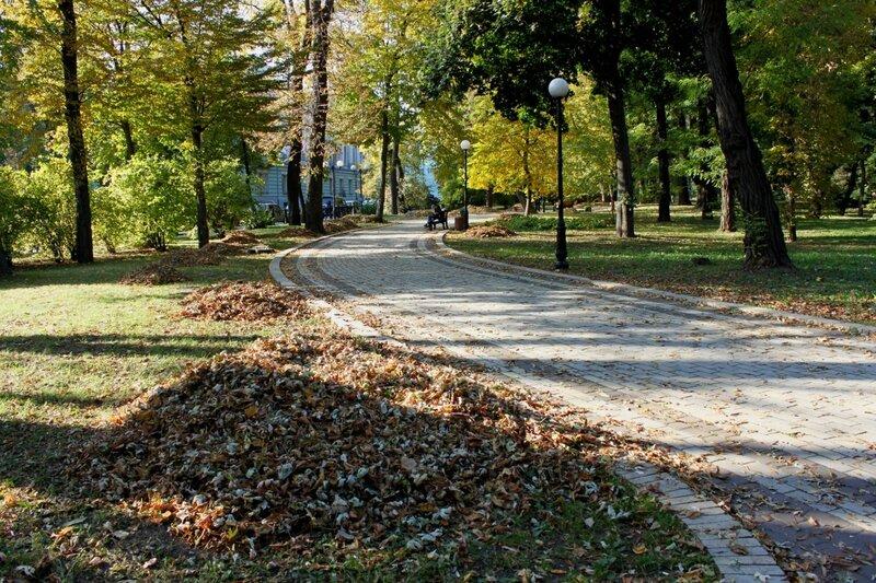 Груда опавших листьев