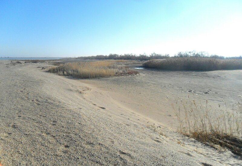 На песках ... SAM_4493.JPG