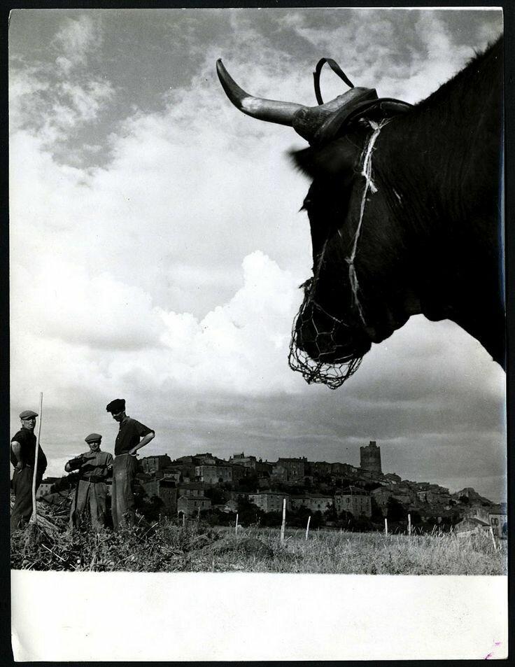 1951. Отеза, Овернь