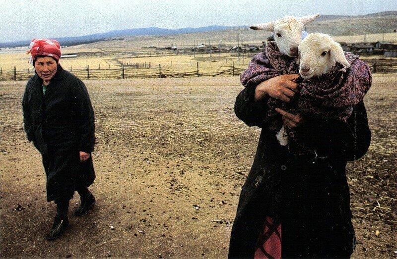 500 бурятов, живущих на острове Ольхон, занимаются в основном овцеводством