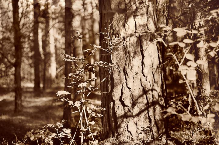 фотографии природы и фотосъемка пейзажей
