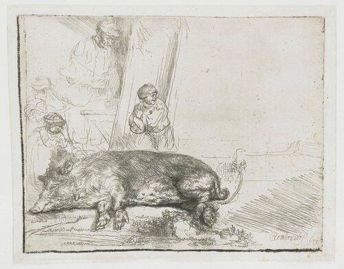 28. Свинья, 1643. Рембрандт на бумаге. Rijksmuseum, Амстердам.