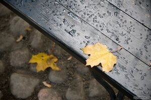 Кленовый лист  (клен, лист, осень, скамья)