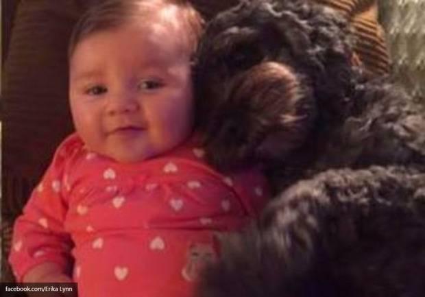 Ценой своей жизни собака спасла ребенка своей хозяйки (фото)