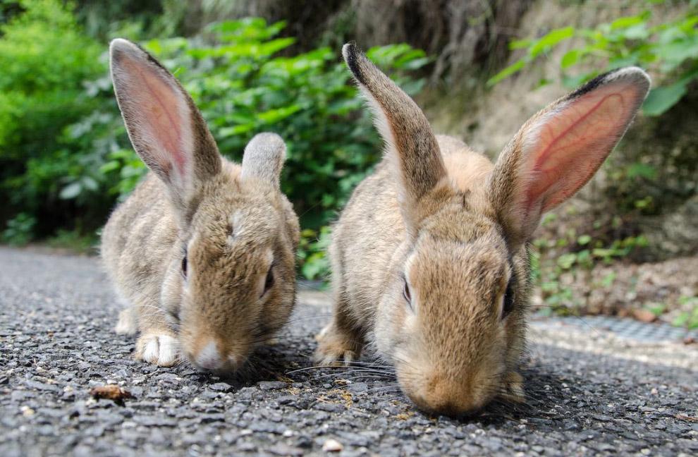 6. Едят животные то, что приносят туристы, плюс их подкармливает персонал, постоянно живущий та