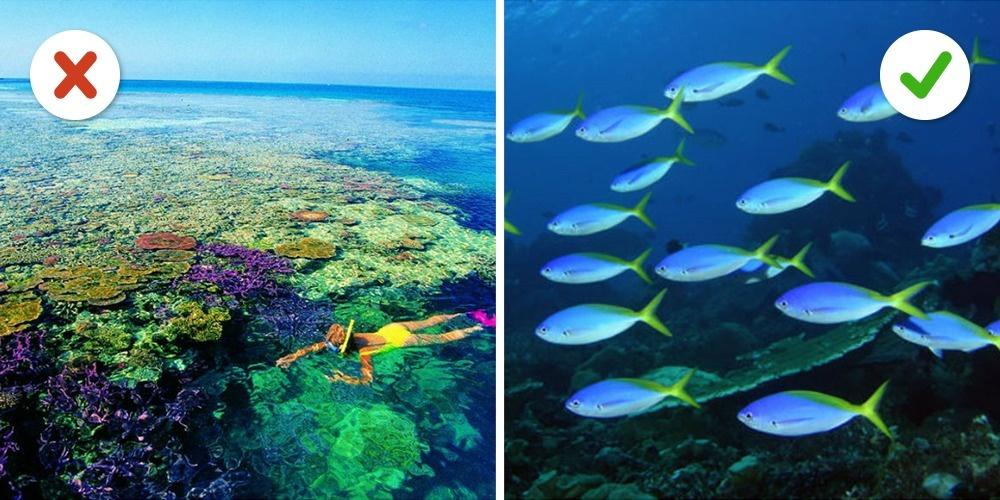 © wordtravels  © travelandleisure  Нестоит: Большой Барьерный риф Под влиянием высоких