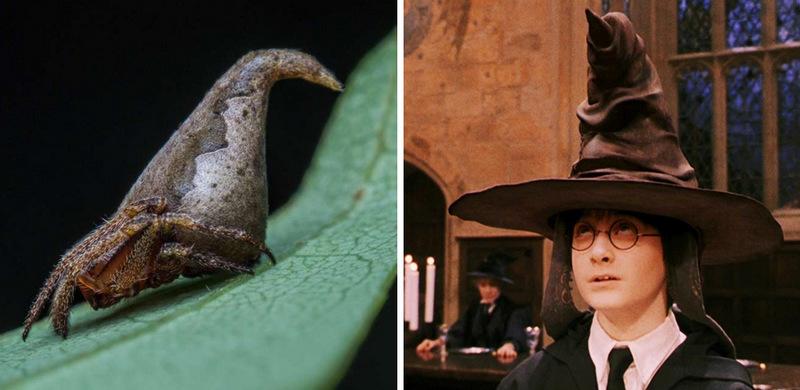 8. Паук Eriovixia gryffindori и Гарри Поттер в Распределяющей шляпе Гриффиндора. Этот симпатичный ма