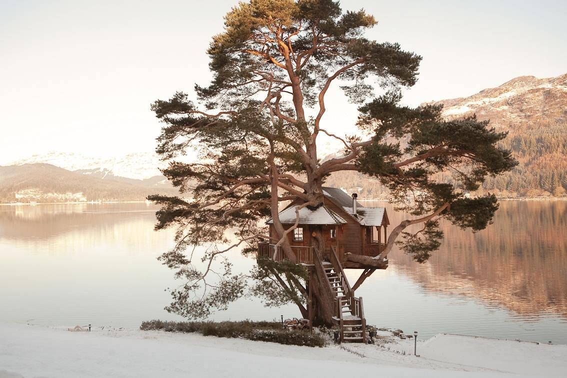 Дом на дереве в Лох-Гойл, Шотландия Даже если вы достаточно равнодушны к деревьям и к природе, женит