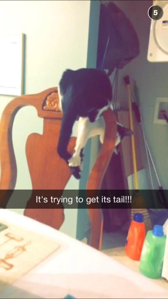 «Он пытается поймать свой хвост!!!»