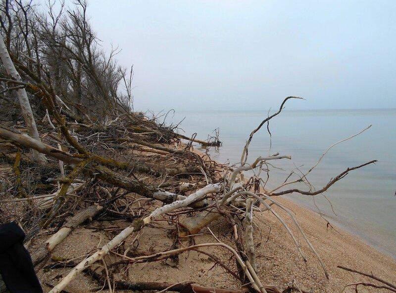 Вид деревьев пострадавших ... DSCN4245.JPG