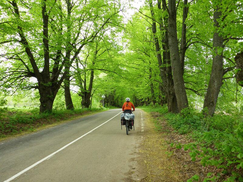 аллея на шоссе вдоль озера череменецкого