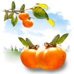 Fruits  - Persimmon