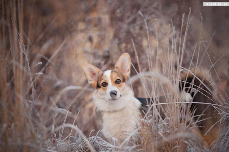 пофотографирую Ваших собак! - Страница 5 0_1697ff_93f21922_orig