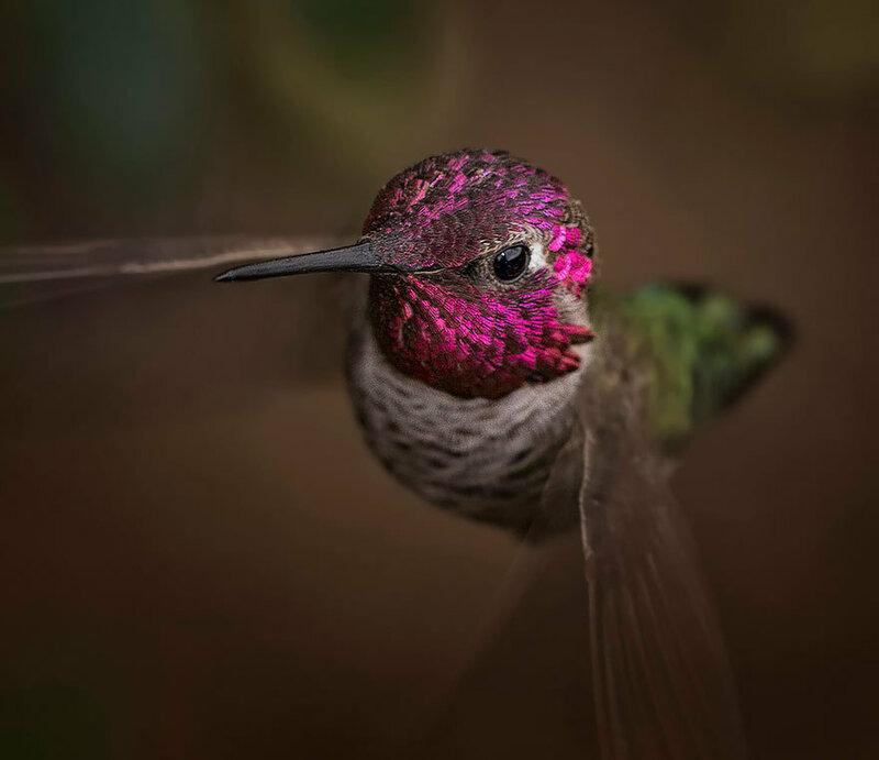 colibri-12.jpg