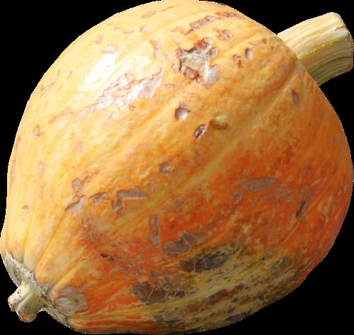 priss_flutteringleaves_pumpkin5.png