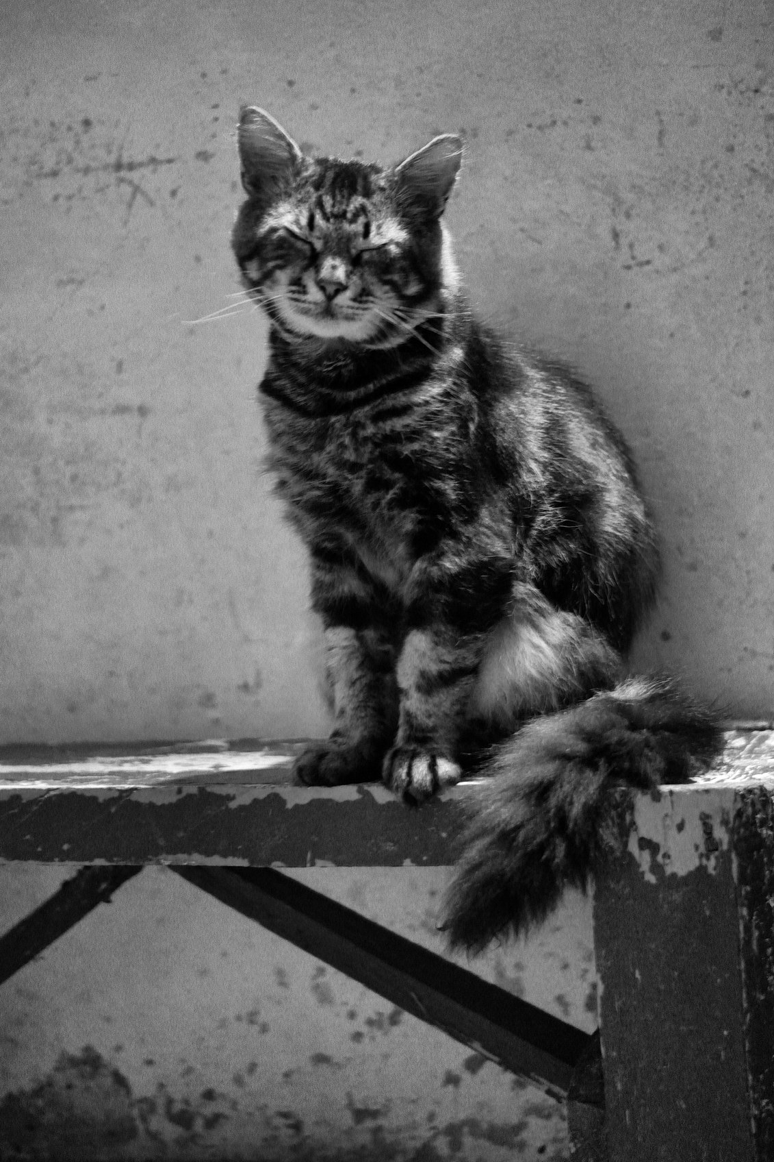 ---Котейки---