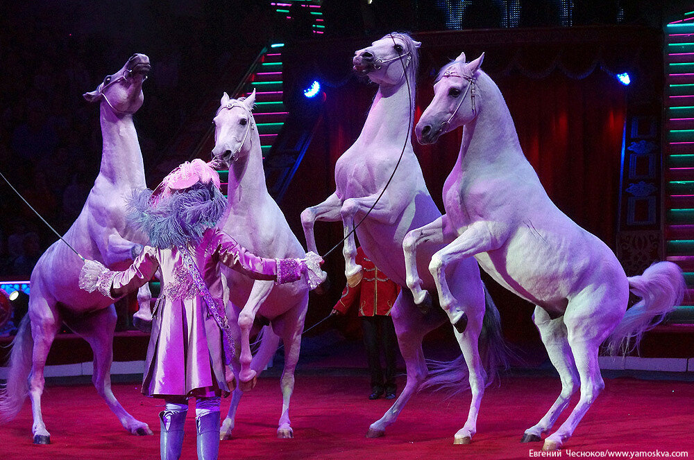 Осень. Цирк Никулина. Лошади. 22.10.15.06..jpg