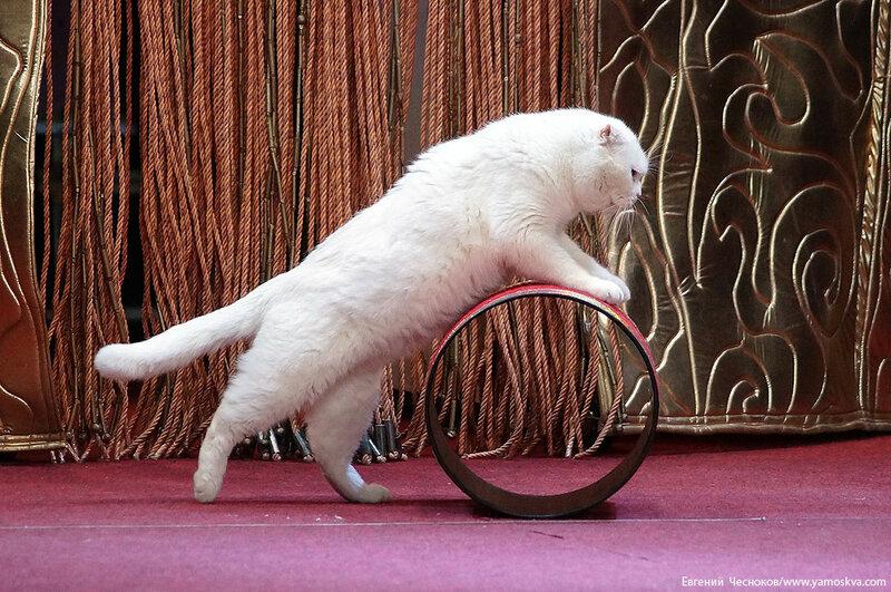 Осень. Театр кошек. ДИНАСТИЯ. 15.10.15.27..jpg