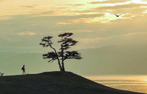 У священного дерева