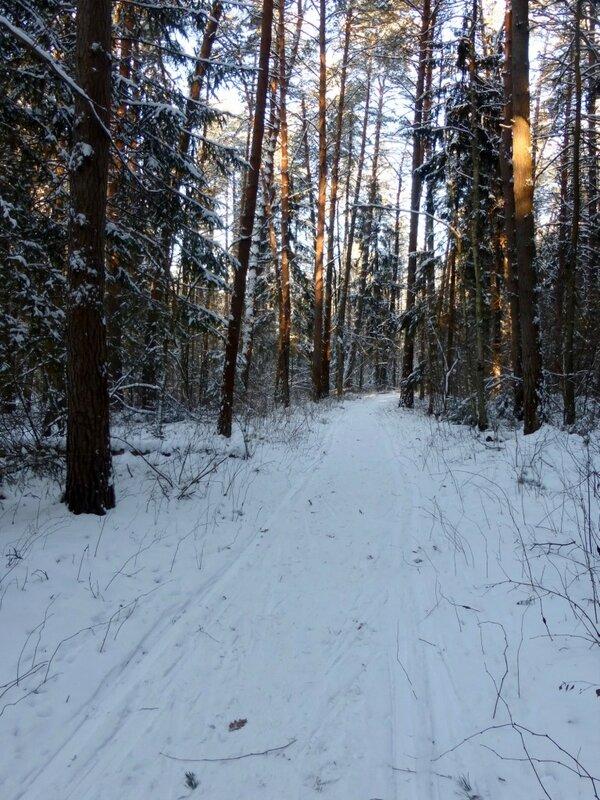 Лыжня в лесу