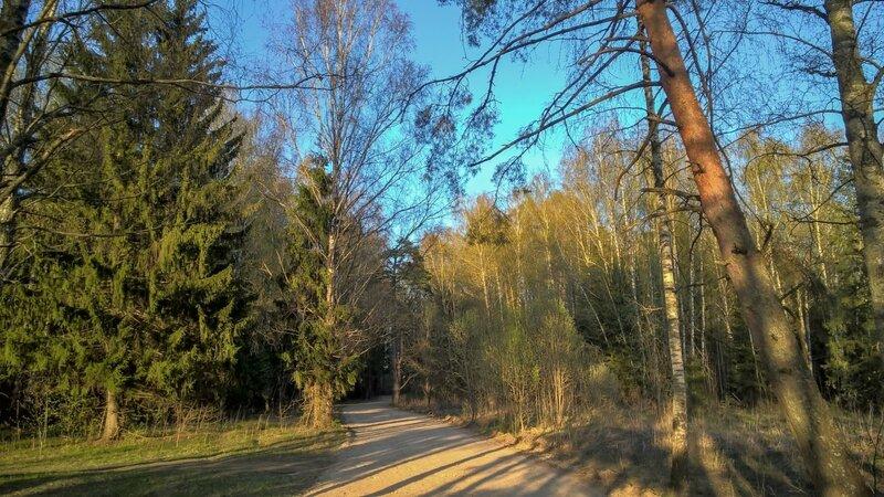 Дорога через лес в Поседкино