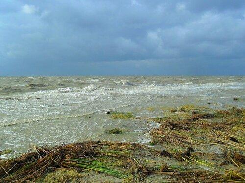 После бури, Азовское побережье, сентябрь 2014
