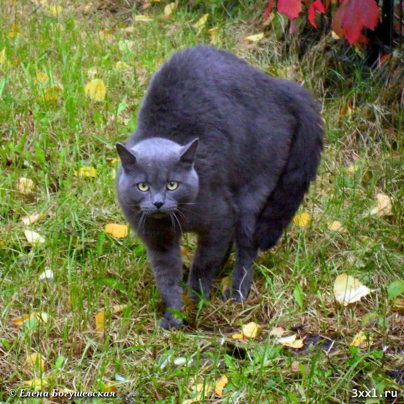 Серый испуганный кот