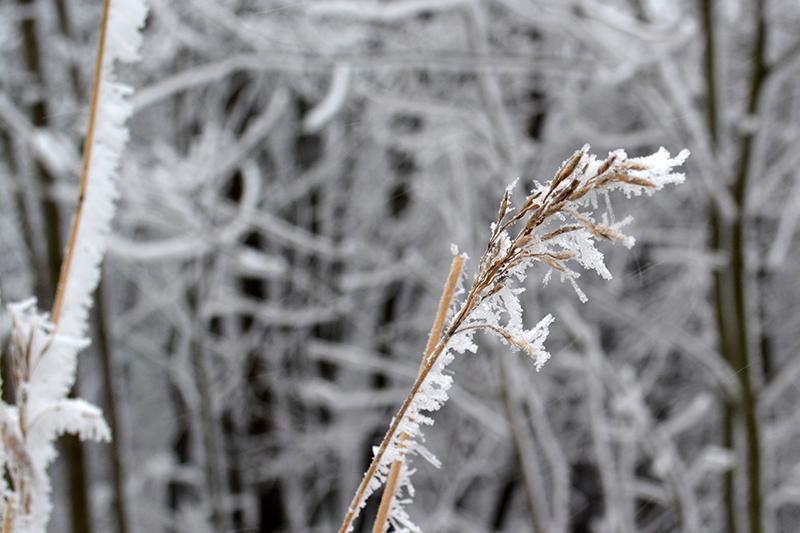 мороз 6