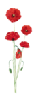 coquelicot1_maryanne07.png