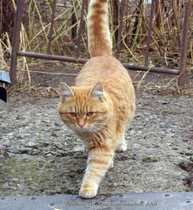 Что делать если кошка не ходит на горшок