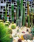 Коллекция кактусов в Блюменпарке. Гамбург. Германия.