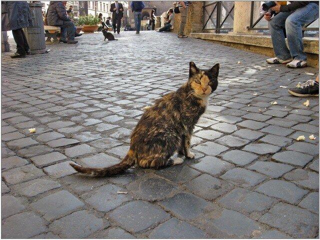 http://img-fotki.yandex.ru/get/5106/romanovaib.e/0_41b9a_7f9c1db5_XL.jpg