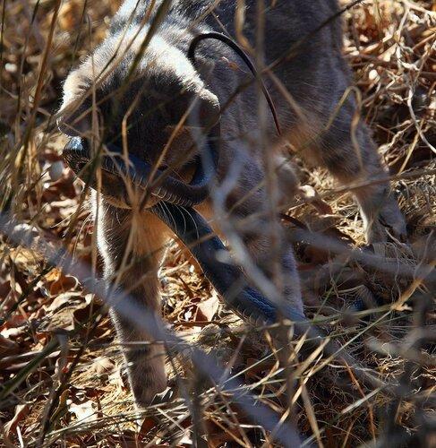 Коты спасли Кипр