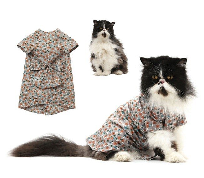 кошачья мода