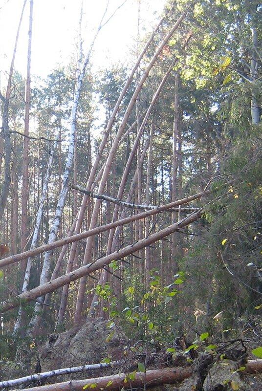 лес после пожара -7